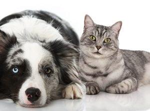 Produkty dla zwierząt